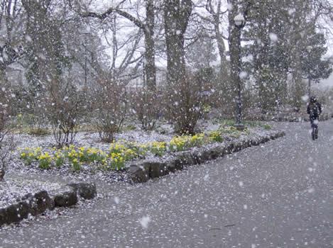 ubc-spring-snow-flower1